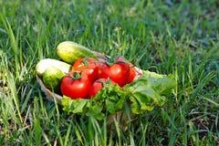Colheita dos pepinos e do tomate Fotografia de Stock Royalty Free
