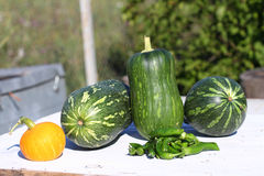 Colheita dos pimentos e de abóboras verdes Imagem de Stock