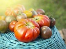 Colheita dos tomates de variedades diferentes na cesta azul fotografia de stock royalty free