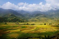 A colheita dourada. Imagem de Stock Royalty Free