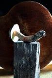 Colheita e forragem do cogumelo Foto de Stock