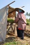 Colheita II do arroz Foto de Stock