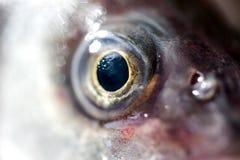 Colheita macro extrema do olho de peixes foto de stock