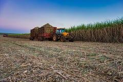 colheita mecânica do campo do cana-de-açúcar com uma colheita levando do trator foto de stock
