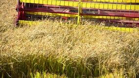 Colheita mecanizada um campo do arroz vídeos de arquivo