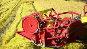Colheita mecanizada um campo do arroz filme