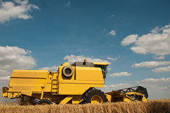 Colheita no campo de trigo Foto de Stock