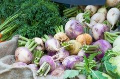 Colheita orgânica dos vegetais Imagens de Stock Royalty Free