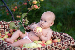 A colheita rica Imagem de Stock Royalty Free