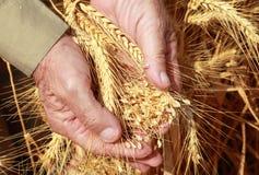 A colheita será boa! Imagens de Stock Royalty Free