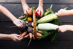 Colheita vegetal da explora??o agr?cola do outono, alimentos frescos crus imagem de stock royalty free