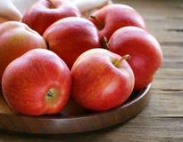 Colheita vermelha madura do outono das maçãs Foto de Stock Royalty Free