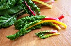 Colheitas coloridas novas frescas do mangold Imagens de Stock Royalty Free