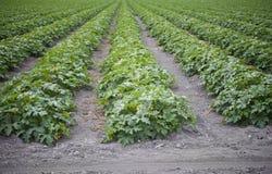 Colheitas da agricultura fotografia de stock