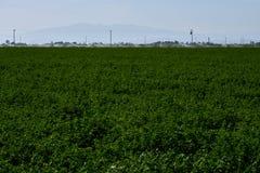 5-18-18 colheitas da alfafa em Lancaster, Ca imagens de stock royalty free