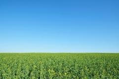 Colheitas da terra de exploração agrícola e céu azul vívido Fotografia de Stock Royalty Free