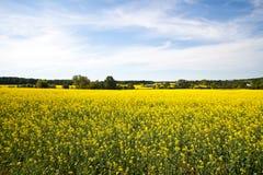Colheitas de florescência dos fazendeiros Foto de Stock Royalty Free