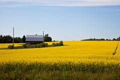 Colheitas de florescência dos fazendeiros Fotografia de Stock Royalty Free
