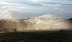 colheitas de irrigação da exploração agrícola Imagens de Stock Royalty Free