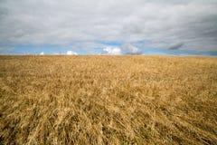 Colheitas do cereal em Cornualha Reino Unido fotos de stock