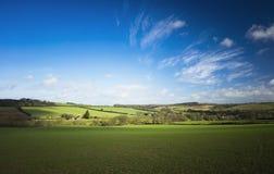 Colheitas do inverno no campo Reino Unido Imagem de Stock Royalty Free