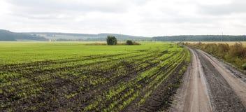 Colheitas do inverno plantadas em áreas rurais Fotos de Stock