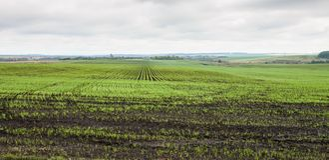 Colheitas do inverno plantadas em áreas rurais Imagens de Stock Royalty Free
