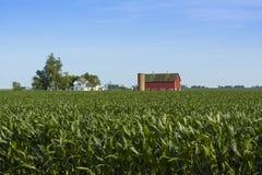 Colheitas do milho Imagens de Stock