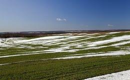 Colheitas do trigo de inverno na mola adiantada Foto de Stock