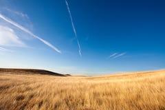 Colheitas douradas e céu azul Imagens de Stock Royalty Free