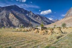 Colheitas em Tajiquistão Fotos de Stock