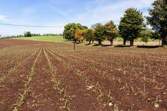 Colheitas que cultivam a paisagem Fotografia de Stock Royalty Free