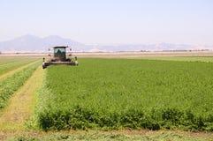 Colhendo a alfalfa Foto de Stock Royalty Free