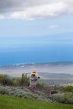 Colhendo a alfazema em Maui Fotografia de Stock