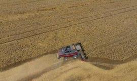 Colhendo a ceifeira do trigo Grão agrícola da colheita das máquinas Imagens de Stock Royalty Free