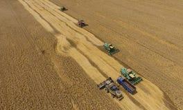 Colhendo a ceifeira do trigo Grão agrícola da colheita das máquinas Foto de Stock