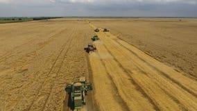 Colhendo a ceifeira do trigo Grão agrícola da colheita das máquinas Imagem de Stock