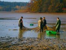 Colhendo a lagoa Imagens de Stock Royalty Free