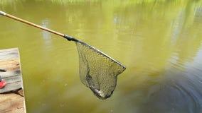 Colhendo a lagoa de peixes Imagens de Stock