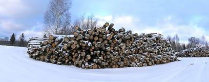 Colhendo a madeira entra uma floresta no inverno Fotografia de Stock