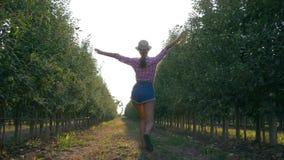 Colhendo no pomar de maçã, a jovem mulher do camponês no chapéu de palha e a camisa andam no jardim do fruto video estoque
