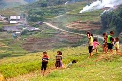 Colhendo o arroz Fotografia de Stock Royalty Free