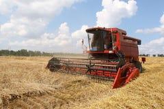 Colhendo o campo de milho Imagens de Stock