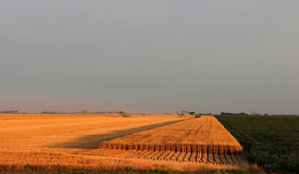 Colhendo o campo de trigo em Dakotas Fotos de Stock Royalty Free