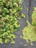 Colhendo o cravo-da-índia Fotografia de Stock Royalty Free