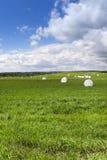 Colhendo o feno da grama Foto de Stock Royalty Free
