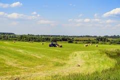 Colhendo o feno nos rolos em um campo de sega com um trator no mês de junho Região de Moscovo Rússia foto de stock royalty free