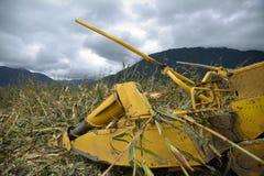 Colhendo o milho para a ensilagem Fotografia de Stock Royalty Free