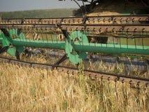 Colhendo o trigo Fotografia de Stock Royalty Free
