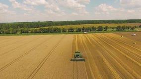 Colhendo o trigo em campos de explora??o agr?cola perto da estrada e da floresta vídeos de arquivo